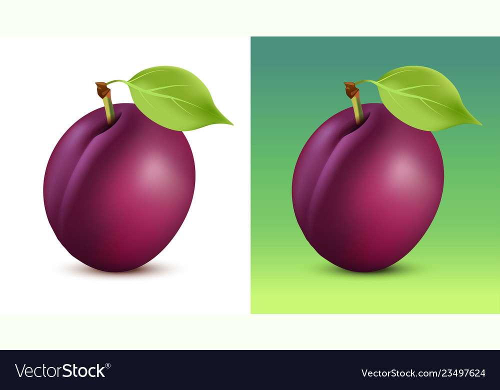 Plum on white and green