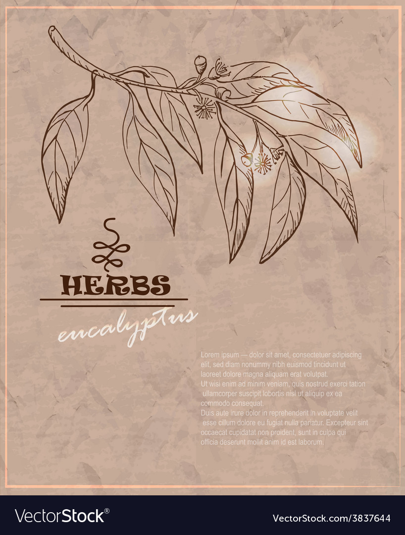 Vintage background with eucalyptus on old paper vector image