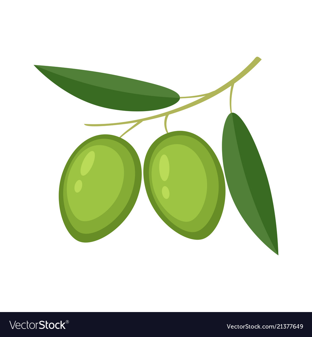 Colorful olives with green leaves Royalty Free Vector Image