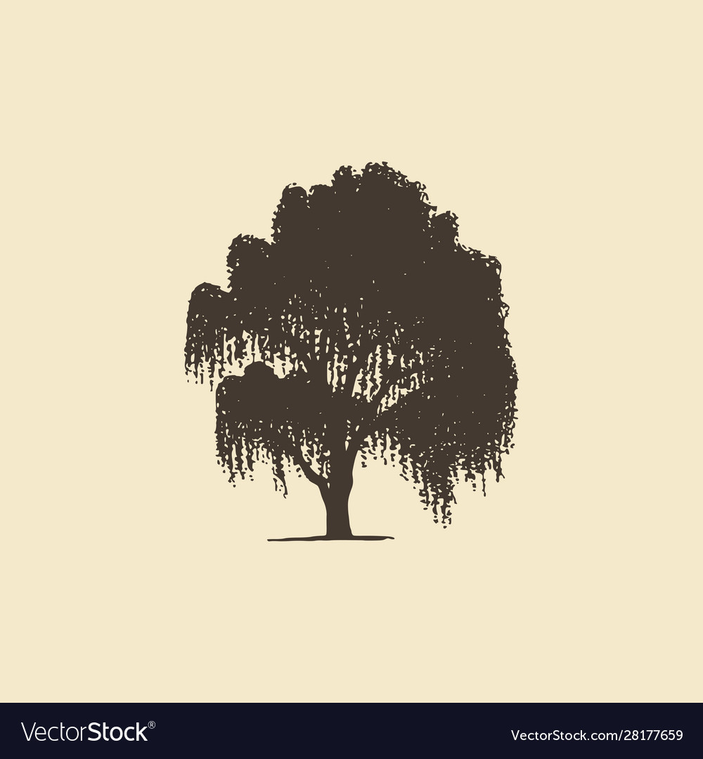Willow or birch hand drawn silhouette