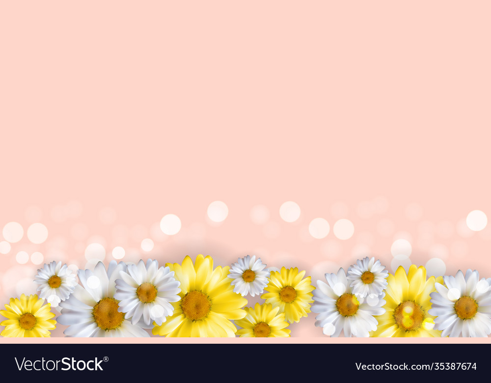 Cute background with chamomile flowers can be