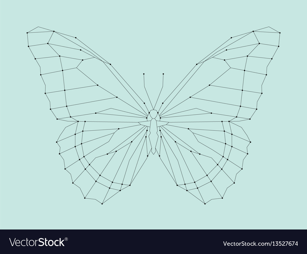 Geometric linear butterfly vector image
