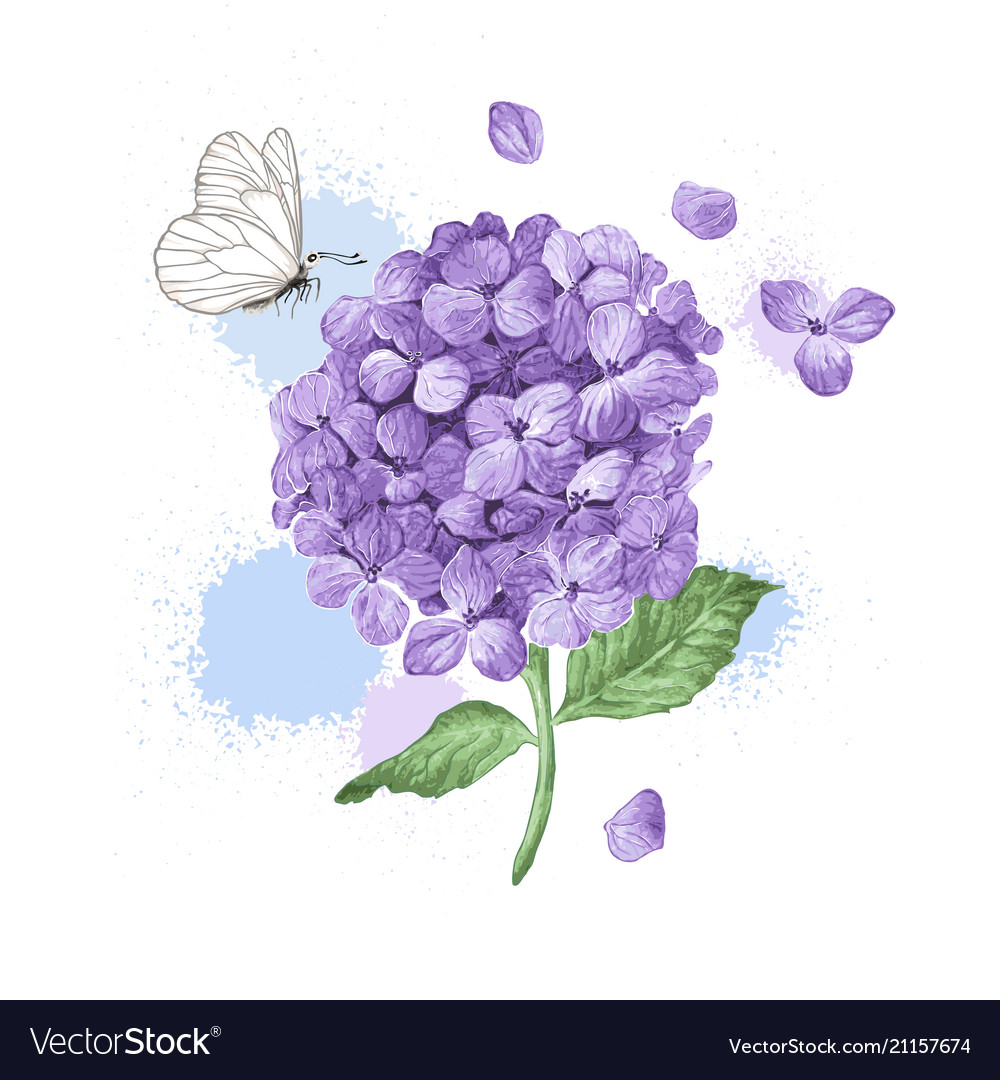 Hydrangea flower butterfly and splashes in