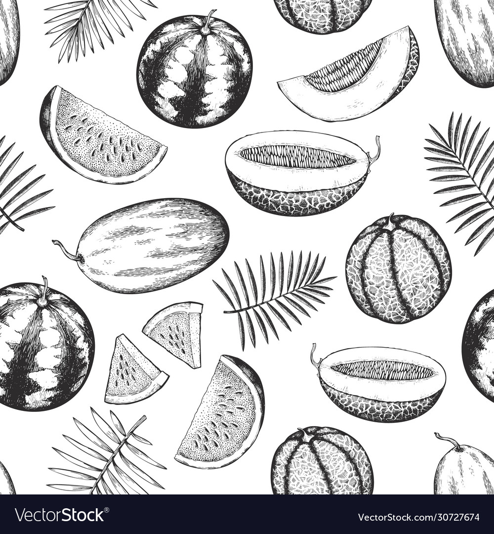 Melons and watermelons with tropical leaves