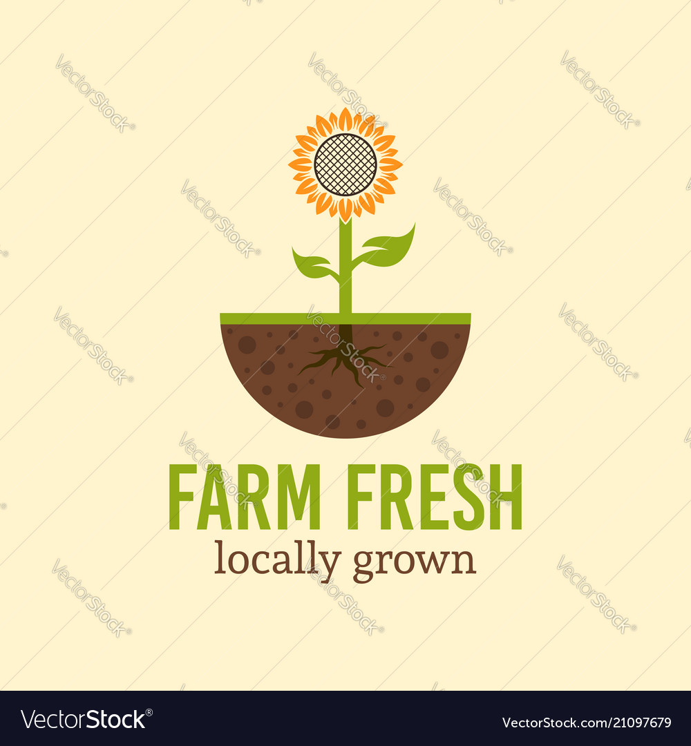 Sunflower sprout from the soil logo concept