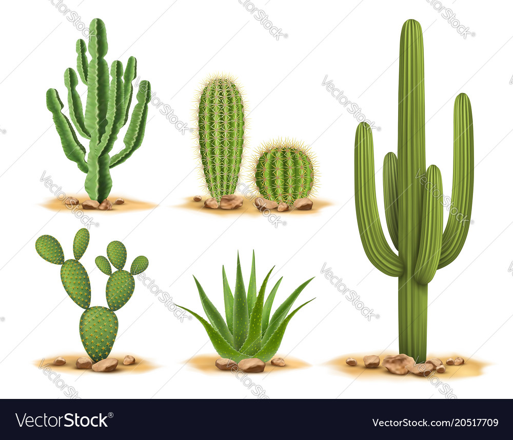 Cactus Plants Set Of Desert Among Sand And Rocks Vector Image