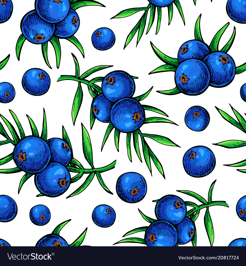 Juniper seamless pattern drawing isolated