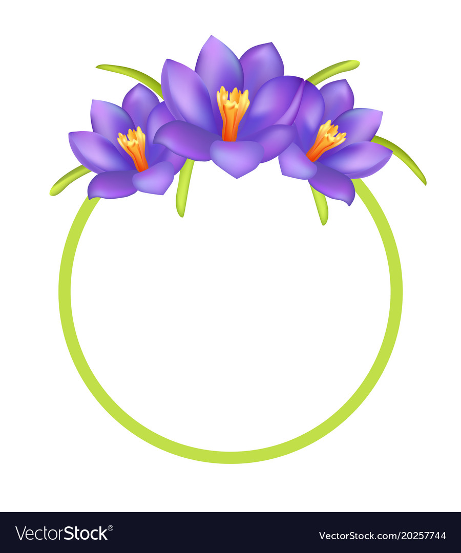 Crocus purple flowers photo frame greeting design vector image