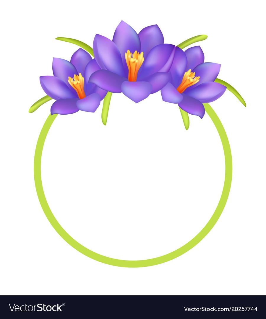 Crocus purple flowers photo frame greeting design
