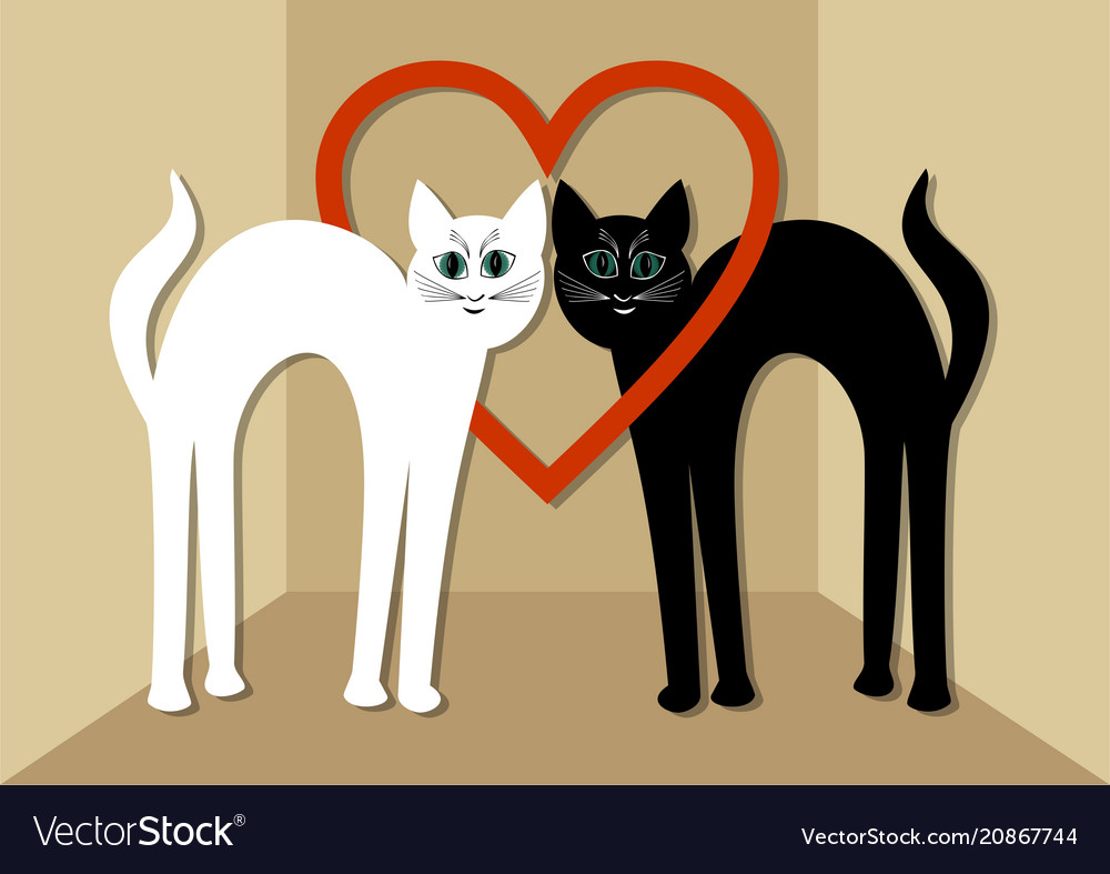 White cat and black tomcat in love two beautiful