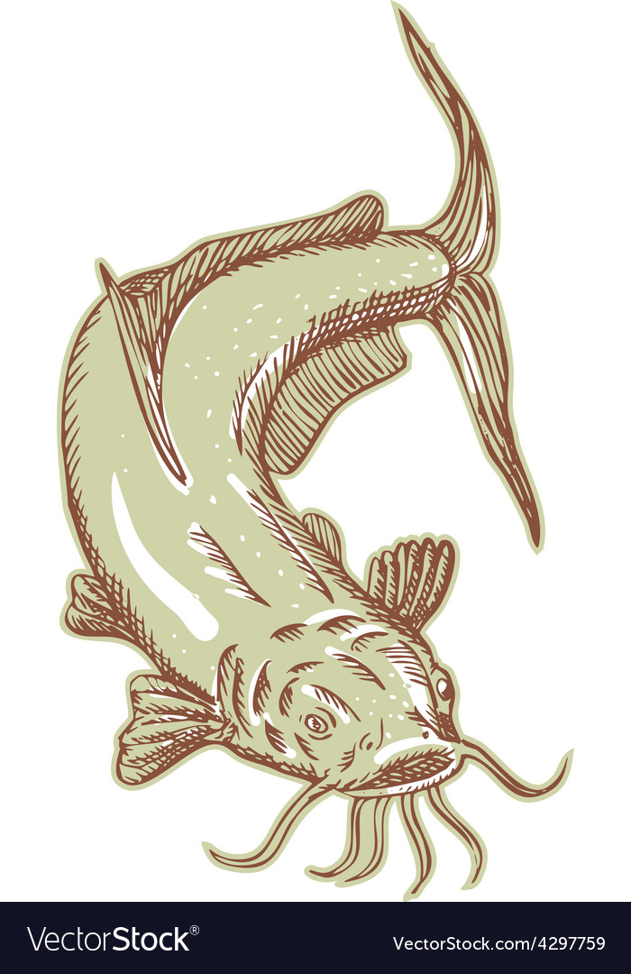 Catfish Mud Cat Diving Etching vector image