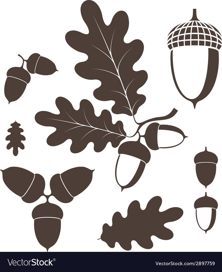 Oak Acorn vector image