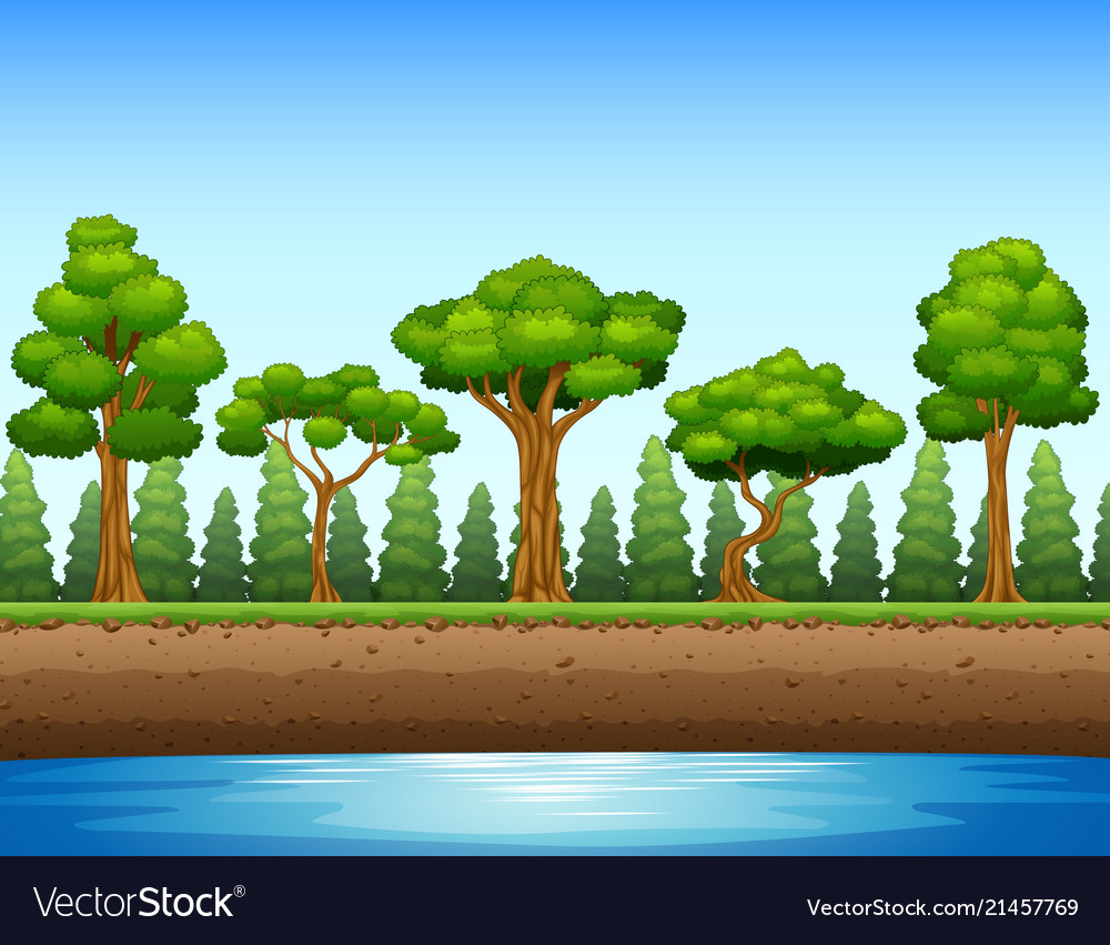 Forest background with river and underground