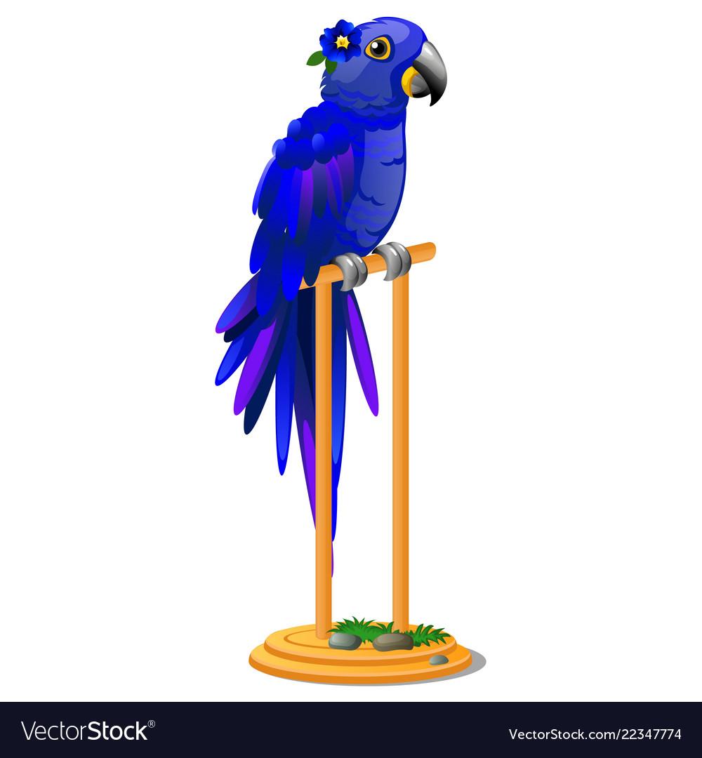 Beautiful bird blue parrot sitting on a wooden