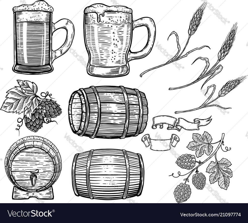 Set of hand drawn beer design elements hop wheat