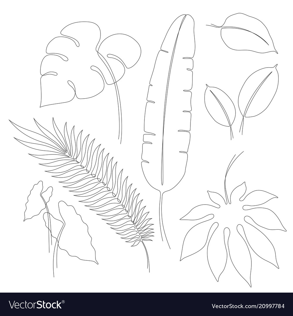 Continuous Line Drawings Tropical Leaves Vector Image Tropical leaf palm print, showing various tropical plants together in one poster. vectorstock