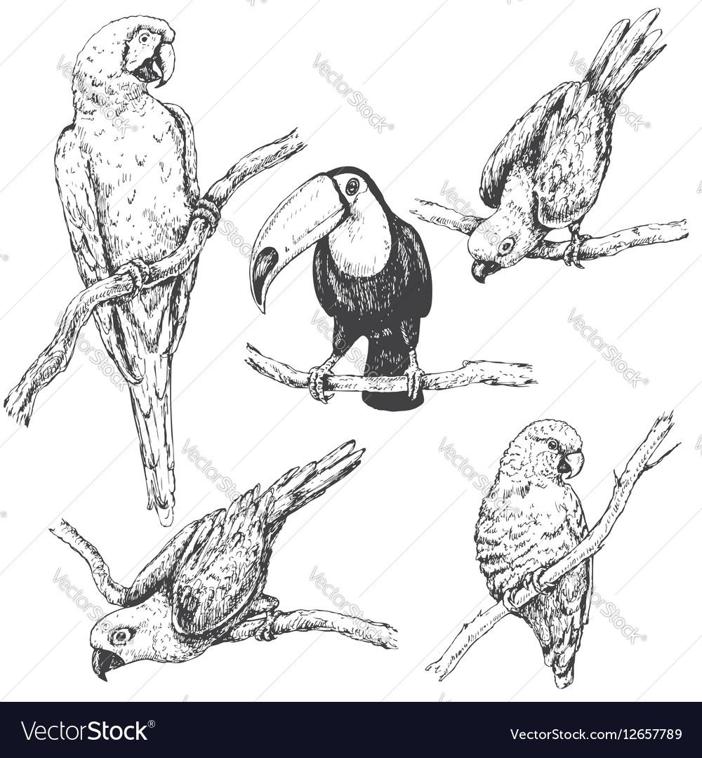 Doodle tropic birds