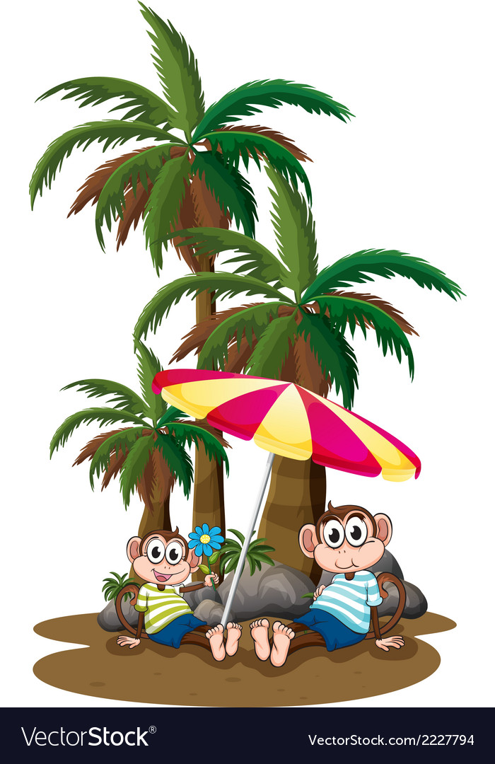 monkeys under the coconut trees royalty free vector image