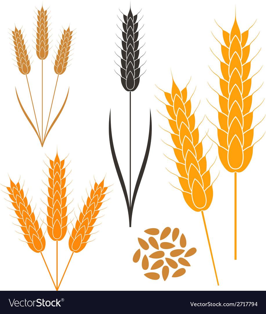 Wheat Royalty Free Vector Image - VectorStock