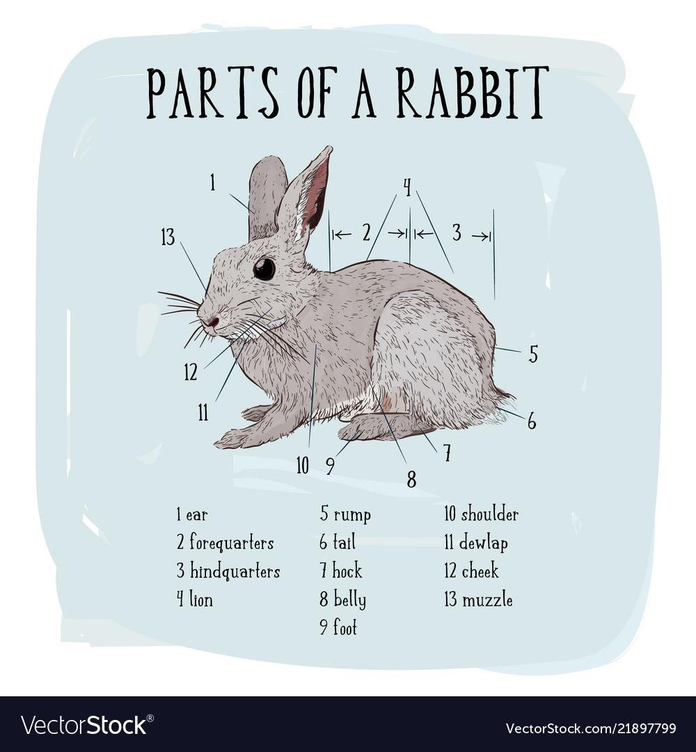 Part of rabbit of engraving rabbit