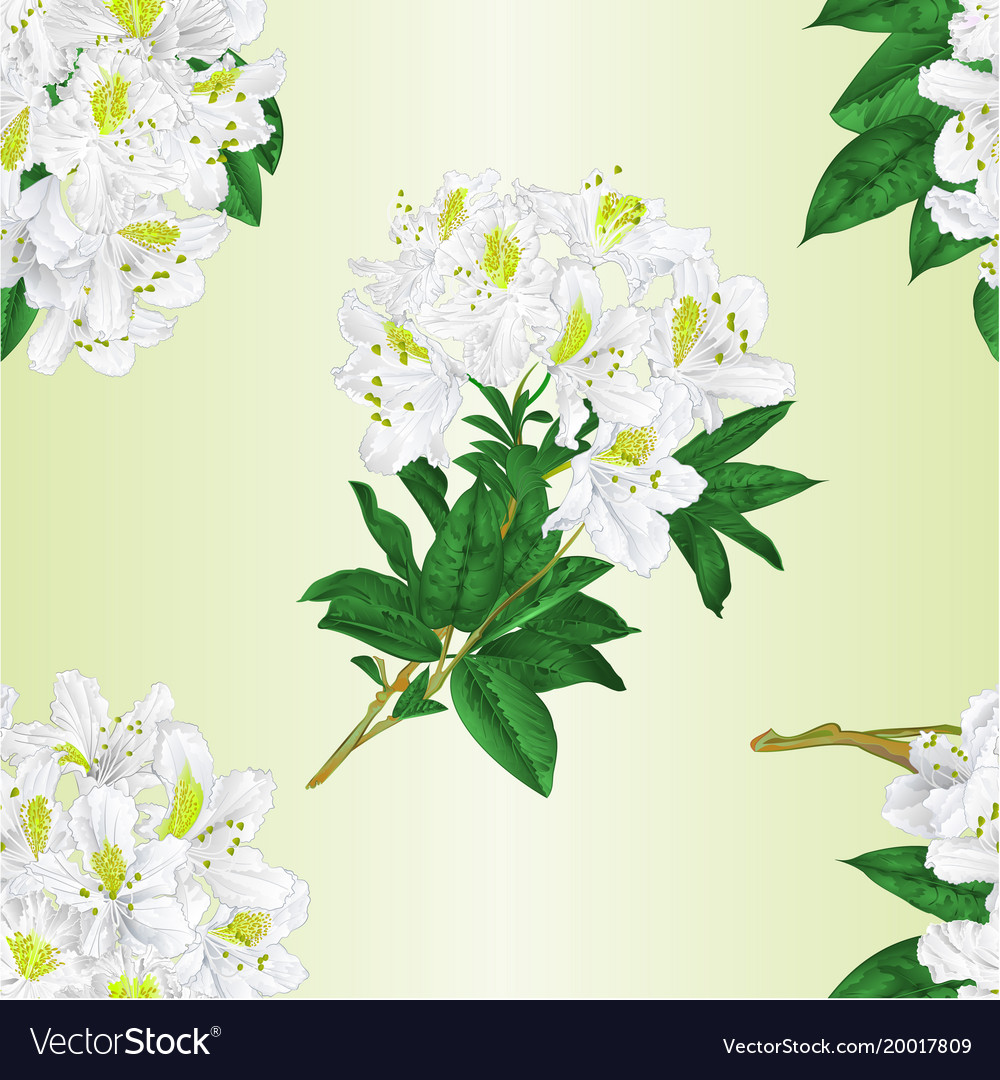 Seamless texture branch white flowers