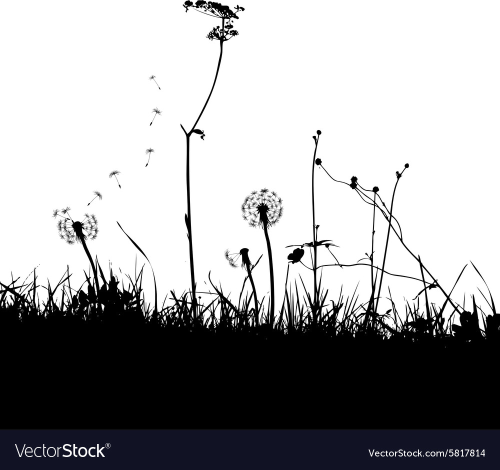 Wild weeds and flower silhouettes