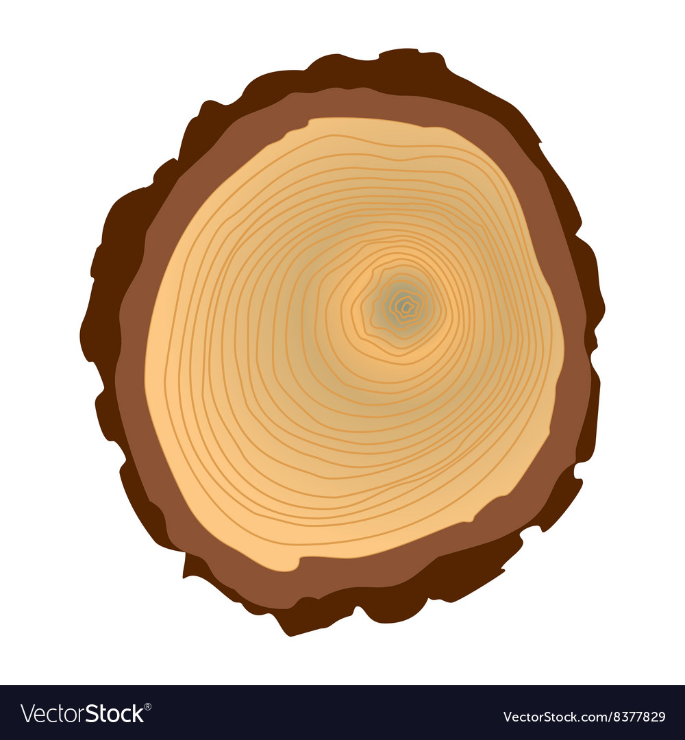 Tree trunk cross section isolated on white vector image