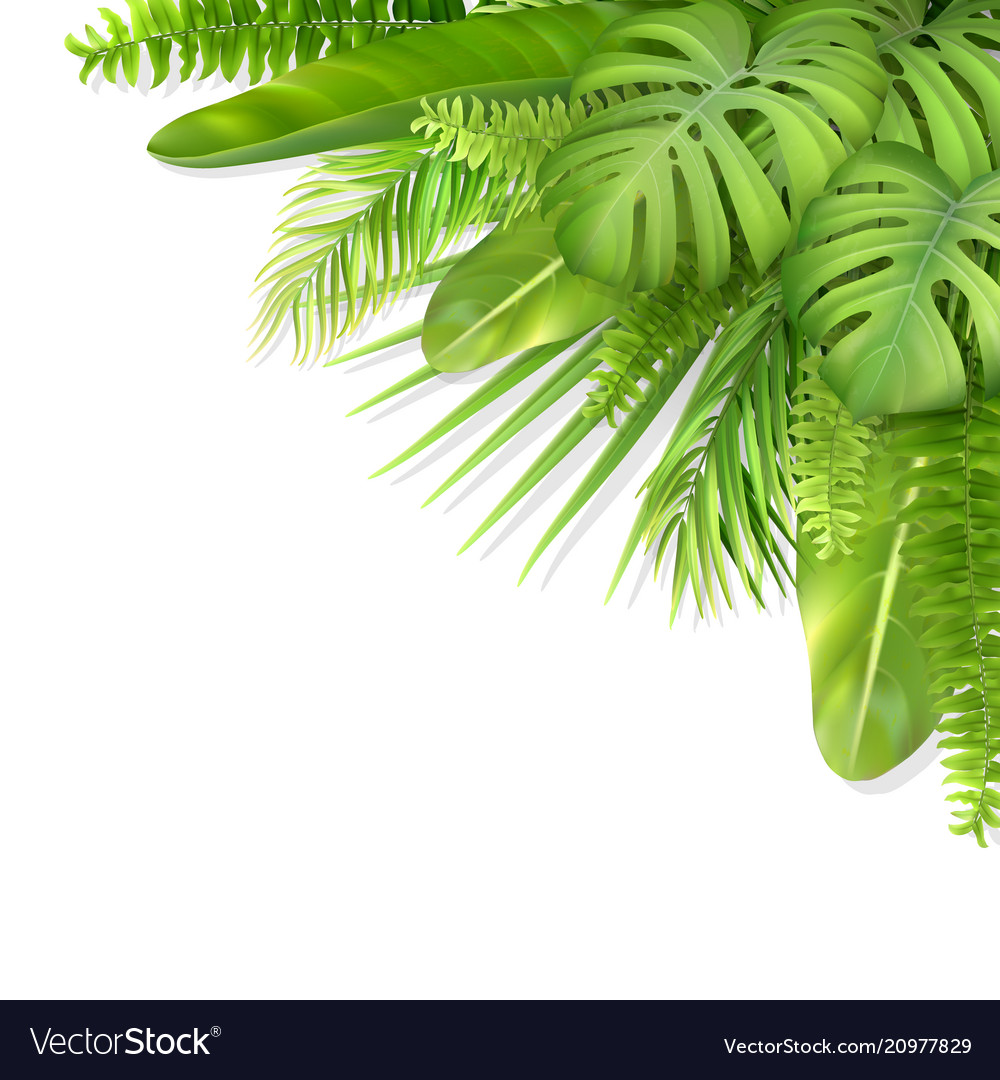 Tropical leaves in a corner