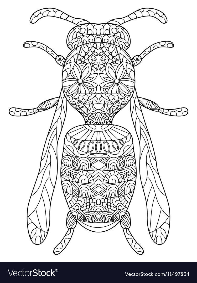 Wasp Coloring for adults Royalty Free Vector Image