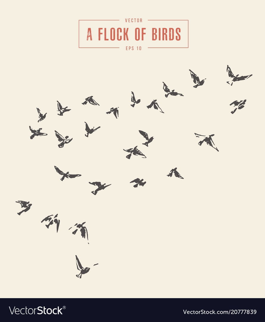A flock of birds drawn sketch