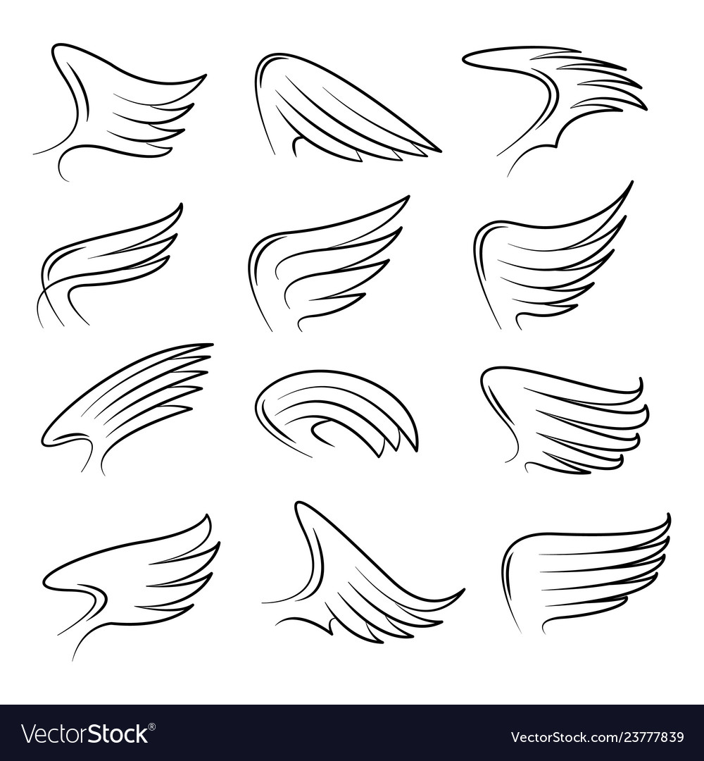 Set of hand drawn bird wings