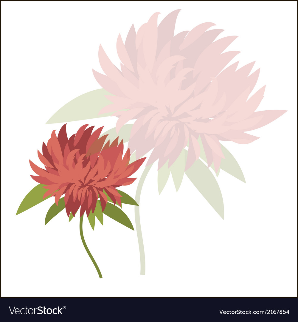 Postcard with flower Astra for your design