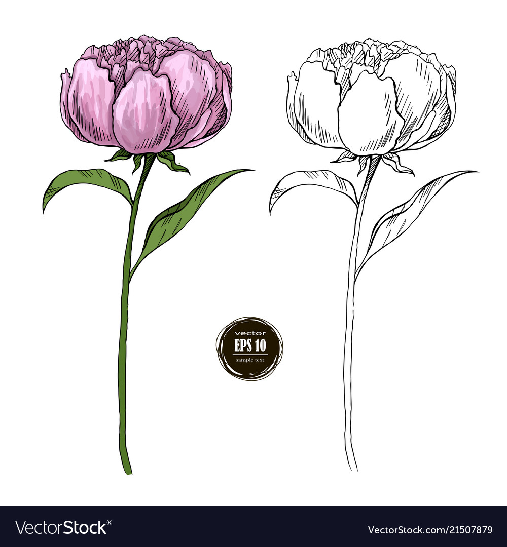 Beautiful peony colored and black and white hand