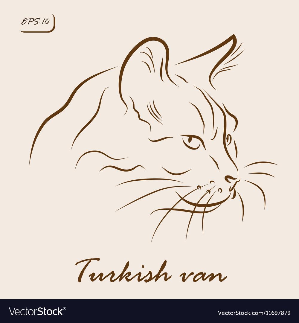 87569008d0 81+ Turkish Van Cat Drawing - THE TRADITIONAL TURKISH ANGORA C FAQs ...