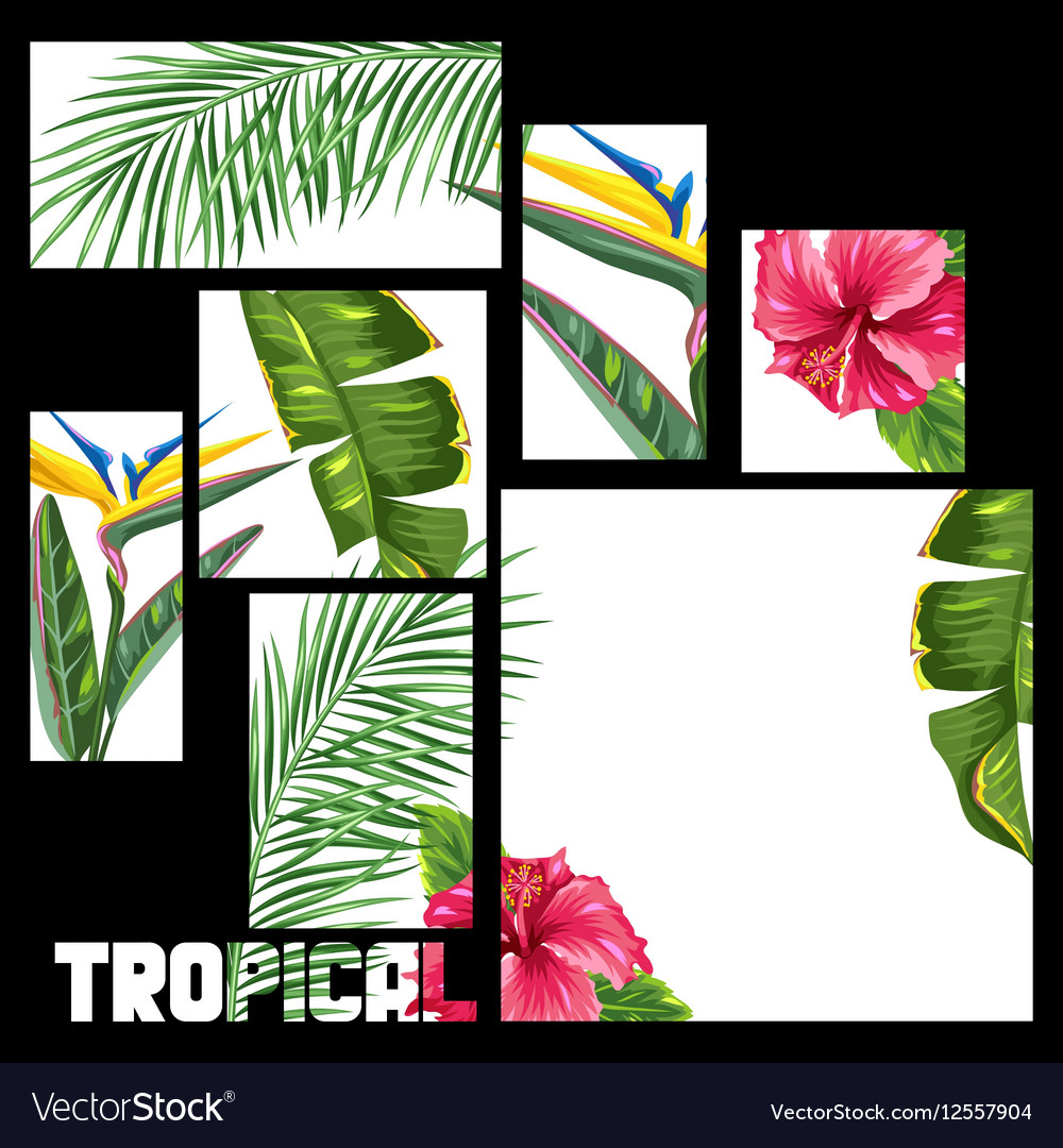 Background with tropical leaves and flowers Palms