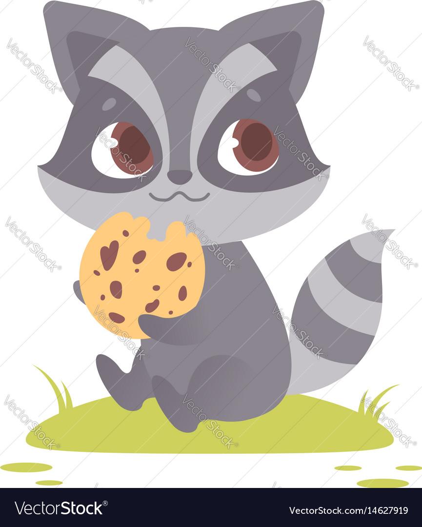 Cute baby raccoon sitting eating a cookie vector image