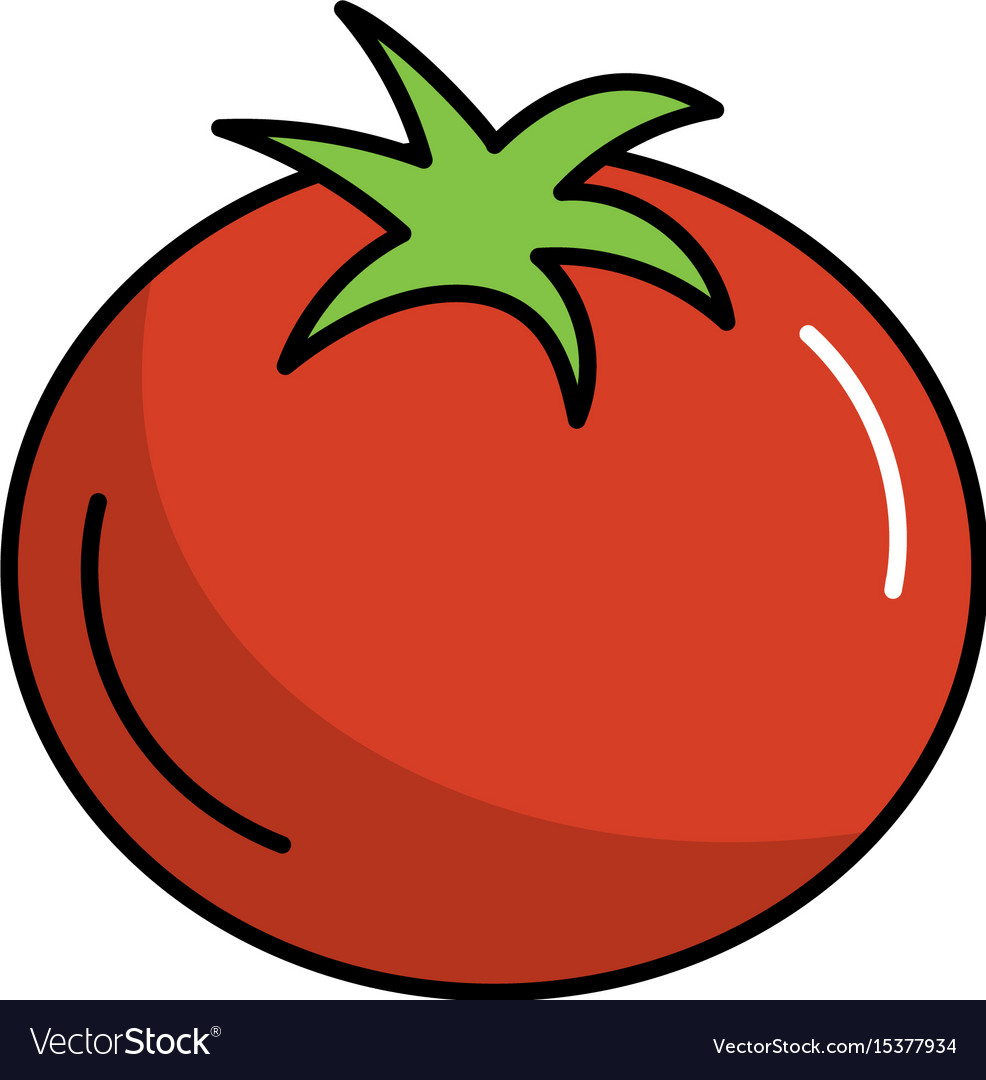 Delicious and health tomato vegetable vector image