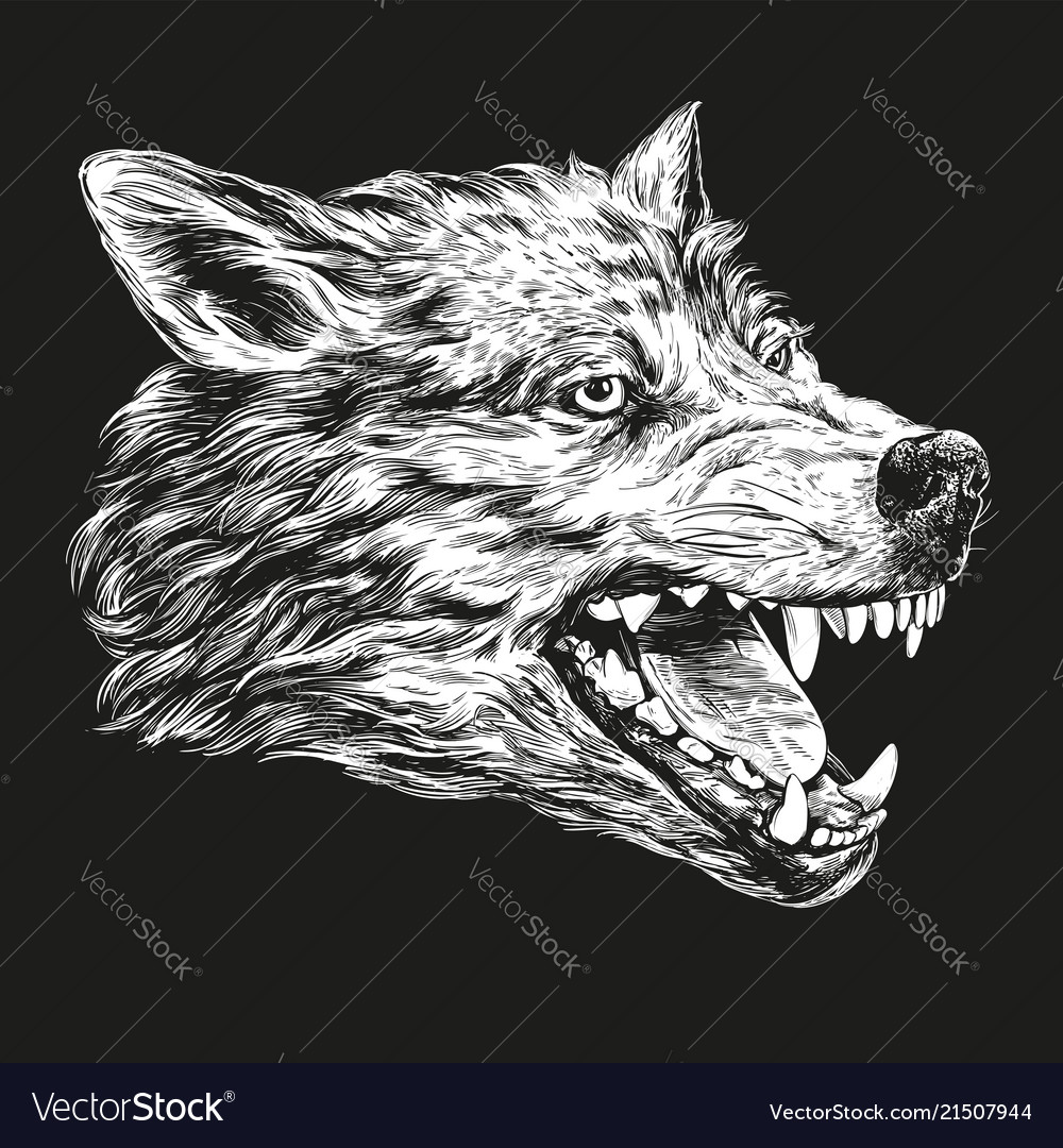 Muzzle of a wolf wildlife hand drawn