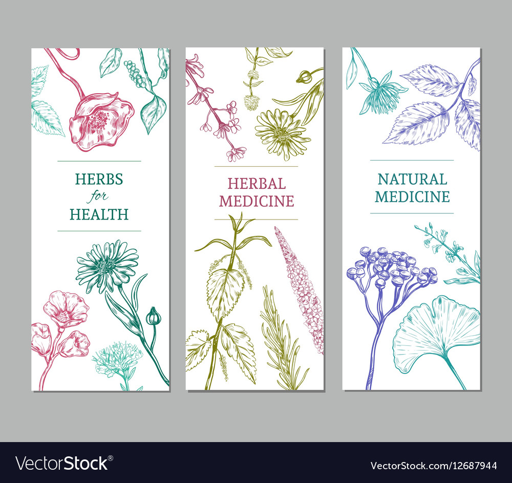 Sketch Herbal Vertical Banners vector image