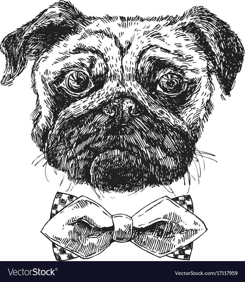 Hand drawn sketch dog vector image