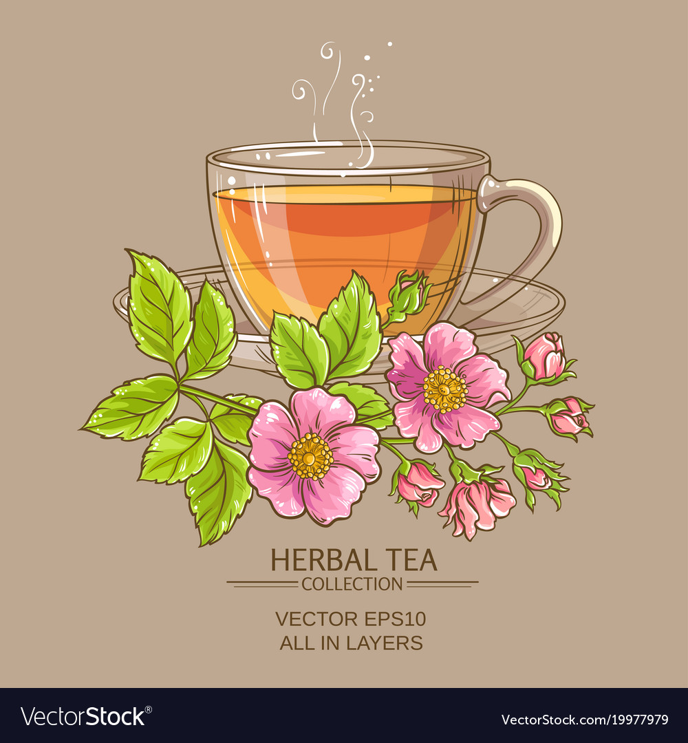 Cup of dog rose tea vector image