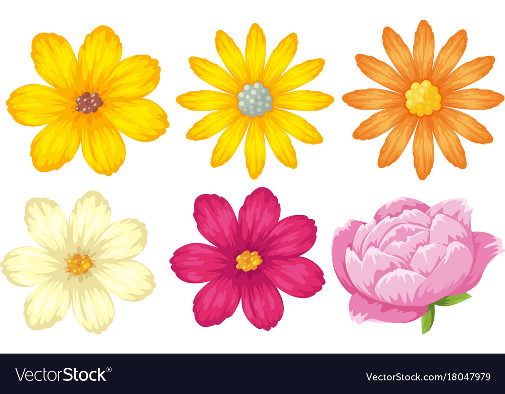 Different kinds of flowers in yellow and pink vector image mightylinksfo