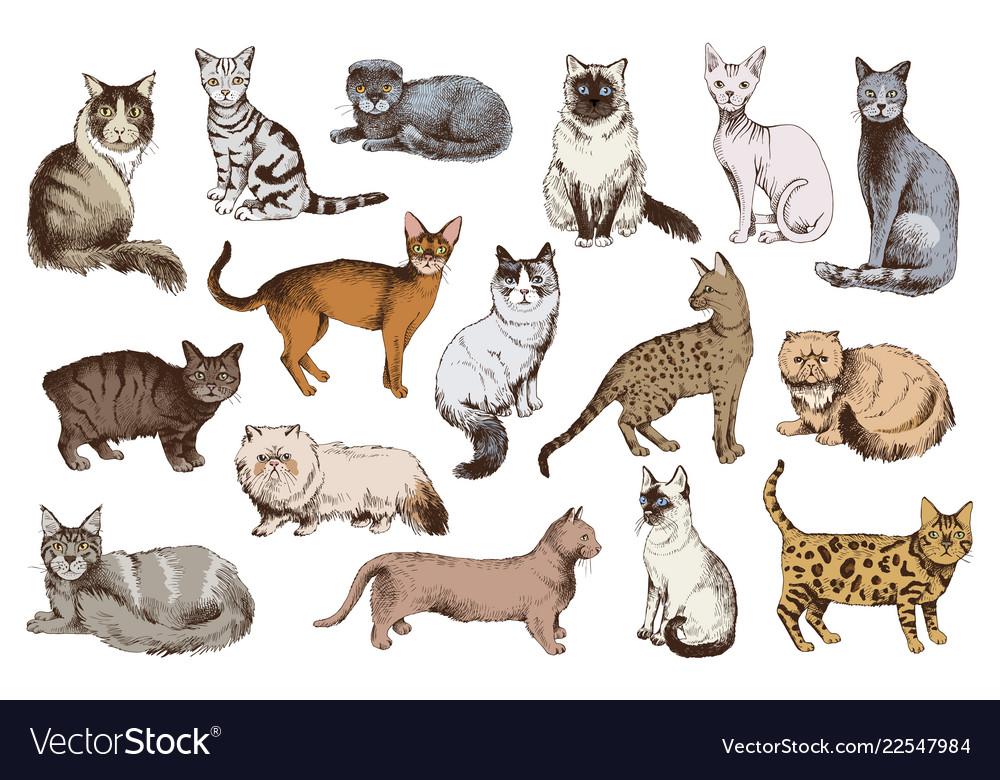16 hand drawn cat breeds