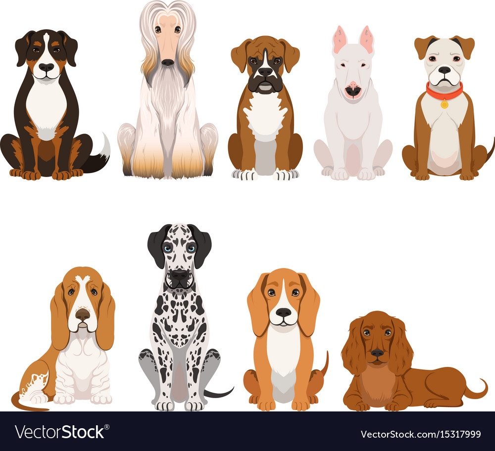 Different breeds of dog group of domestic animals vector image