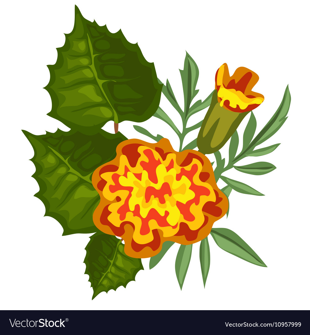Yellow flower in cartoon style isolated vector image