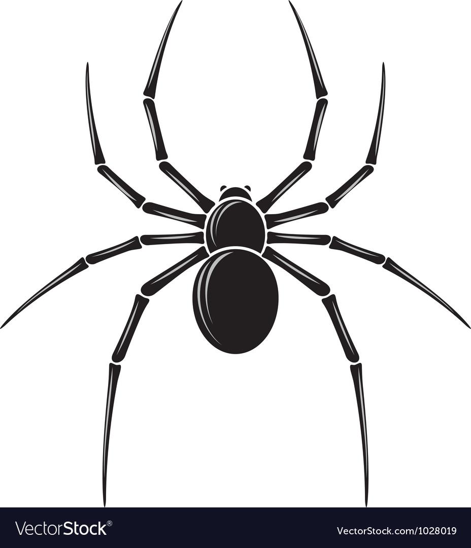 spider royalty free vector image vectorstock rh vectorstock com spider vector free download spider vector eps