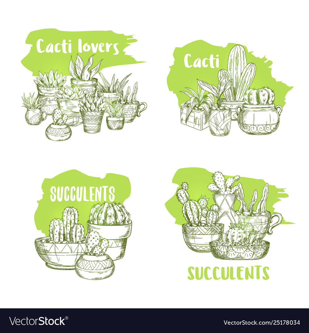 Sketches cactus in pots and succulent plants