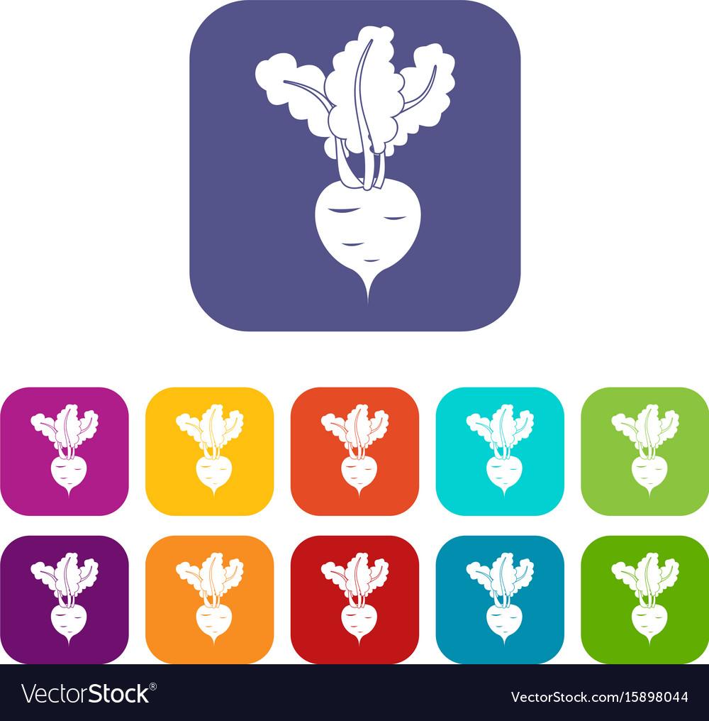 Fresh beetroot icons set
