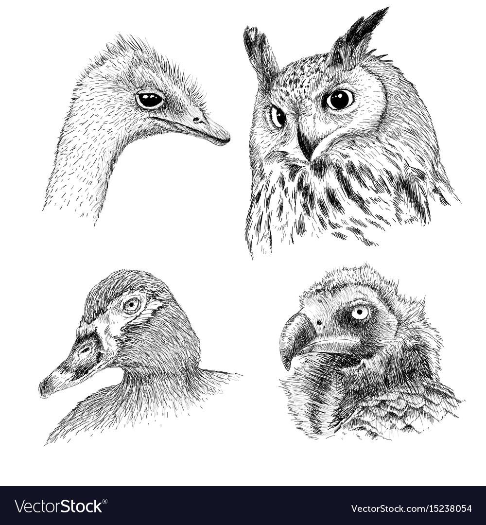 Realistic heads of wild birds