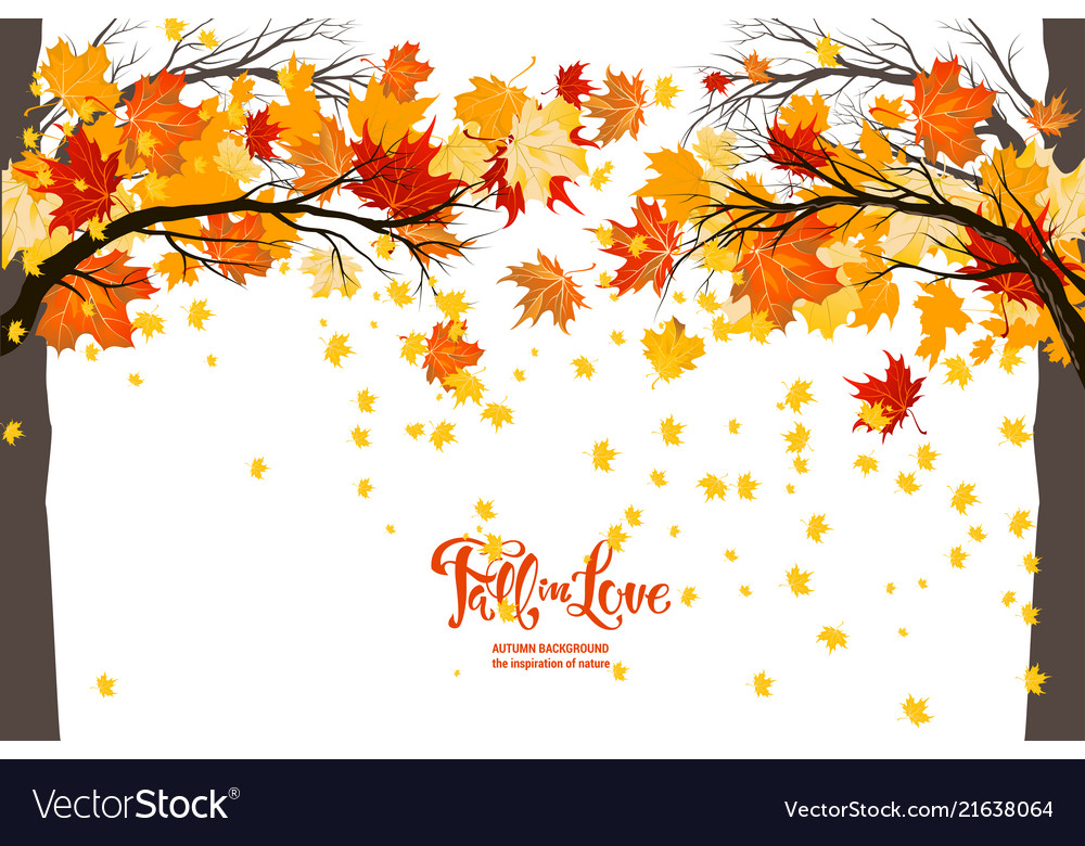 Maple Fall Trees Royalty Free Vector Image Vectorstock